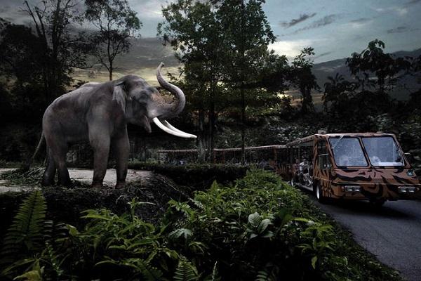 Night Safari Tour in Singapore with Priority Tram
