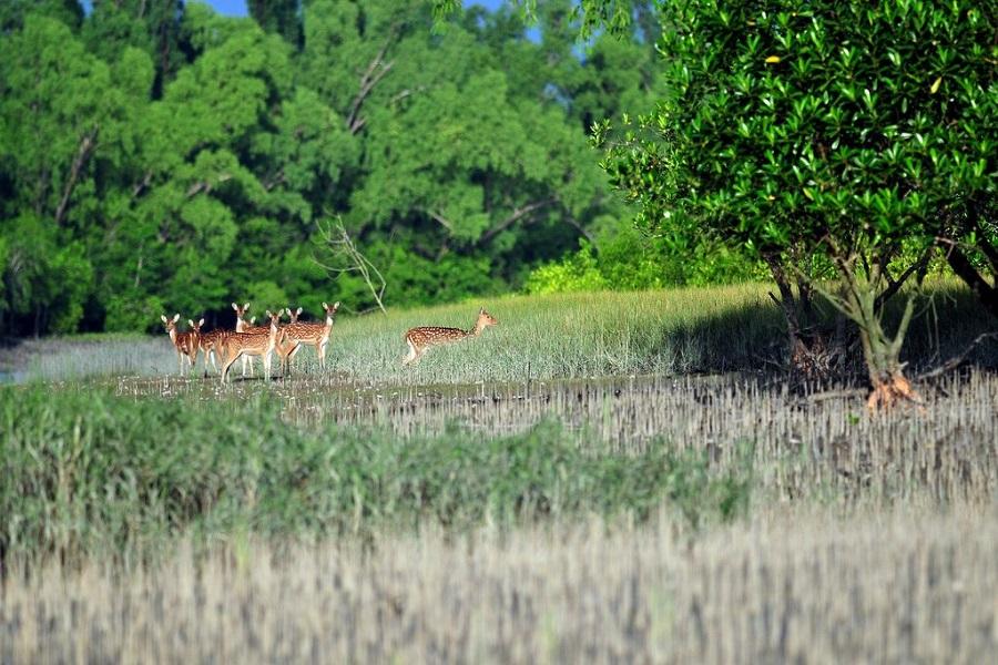 Sundarban Premium Tour
