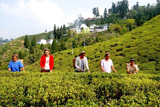 Exotic Darjeeling